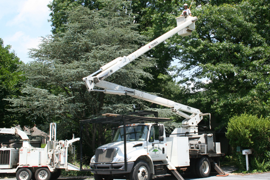 Utility Power Line Tree Clearing